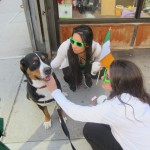 Oscar The Grouch Dog (Swissy) celebrates St. Patrick's day with his fans