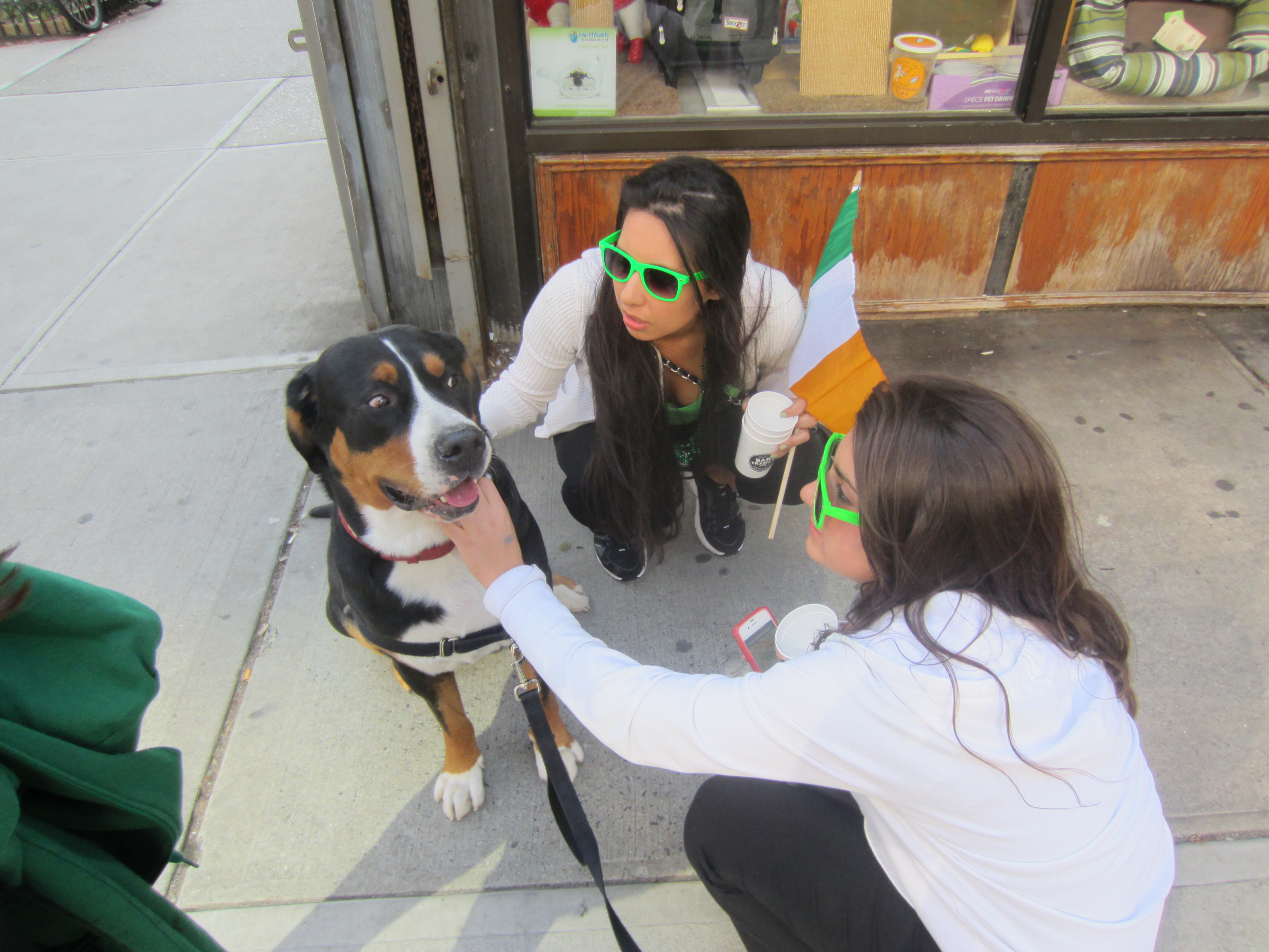 Day With His Greater Swiss Mountain Dog Greater Swiss Mountain Dog