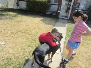 "Cousin Oscar in ""Family Dog"" (Greater Swiss Mountain Dog)"