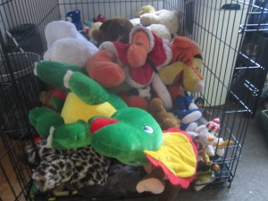 Oscar The Grouch Dog's Toy Chest (Greater Swiss Mountain Dog)