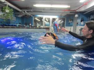 Oscar The Swissy (GSMD) goes swimming