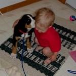 Swissy (GSMD) Puppy