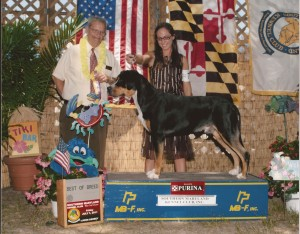 Oscar The Grouch & Ashley Cuzzolino Win Best of Breed at the Dog Show (Greater Swiss Mountain)