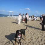 Oscar The Grouch Dog Attends a Dewey Beach Wedding