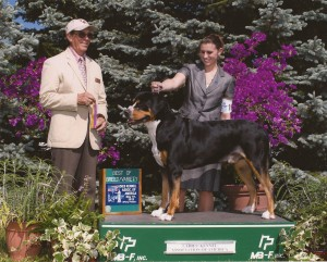 Oscar The Grouch Greater Swiss Mountain Dog Best of Breed with Rachel Kulp