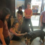 Oscar The Grouch Greater Swiss Mountain Dog Meets New Fans