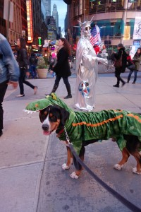 Oscar The Grouch Swissy, Bernese, or Alligator?