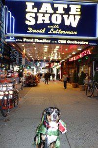 Oscar The Grouch is a happy puppy in front of the David Letterman show