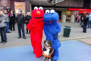 Oscar The Grouch Dog Meets Elmo and Cookie Monster