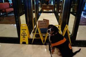 Oscar The Grouch Dog Can't Go Home (Swissy)
