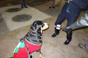 Oscar The Grouch Greater Swiss Mountain Dog Does a TV Interview with Channel 5