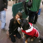 Oscar The Grouch GSMD Dog Meets New Fans