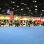 Greater Swiss Mountain Dogs at the AKC/Eukanuba National Championship Dog Show