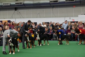 Westminster Kennel Club Dog Show Photos Coming Soon