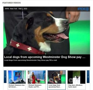 Oscar The Grouch Dog Swissy Stars On The WPIX Morning Show