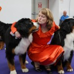 Bernese Mountain Dog Kiss