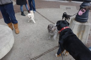 Oscar The GSMD Meeting New Friends