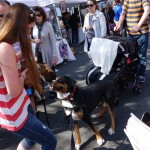 Oscar The Grouch Dog Goes To The Hoboken Music Festival