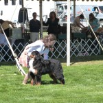 Kelly Rauschmeier Handling a Bernese Mountain Dog From Trulli Kennels
