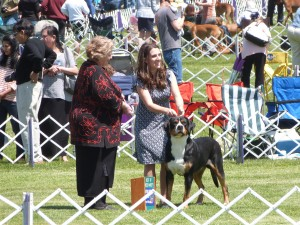 Oscar The Grouch Swissy Goes Best of Breed At The Trenton Dog Show