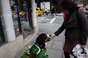 Oscar The Grouch Dog does tricks for halloween treats