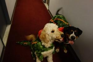 Swissy & Golden Doodle Alligator Halloween